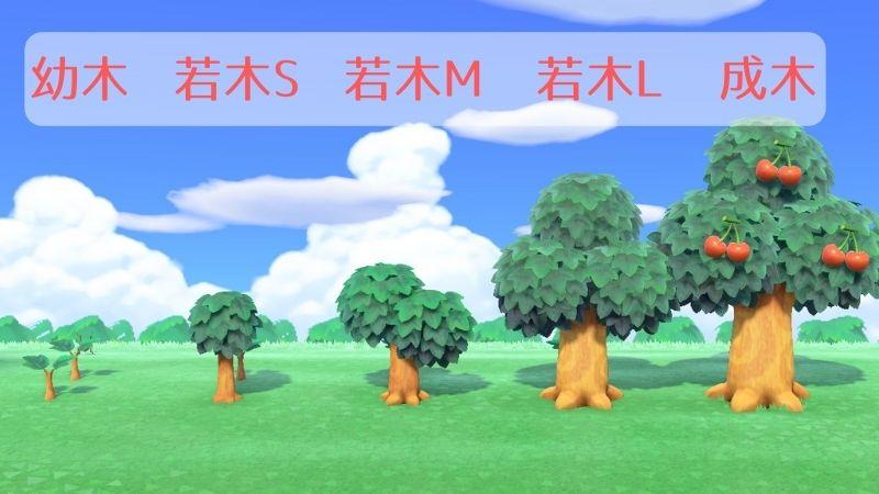 森 成長 を 止める 木 の あつ