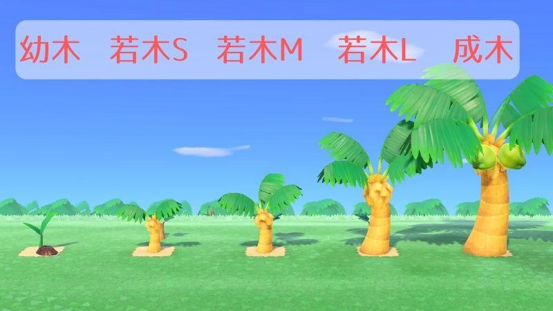育て の 方 ヤシ あつ 森 木 【あつ森】木が育たない時の対処法!木が大きくならない原因はこれかもです。