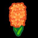 オレンジのヒヤシンス