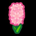 ピンクのヒヤシンス