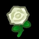 しろいバラ
